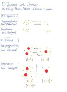 Berühmt Diffusion Und Osmose Arbeitsblatt Klasse 8 Bilder ...