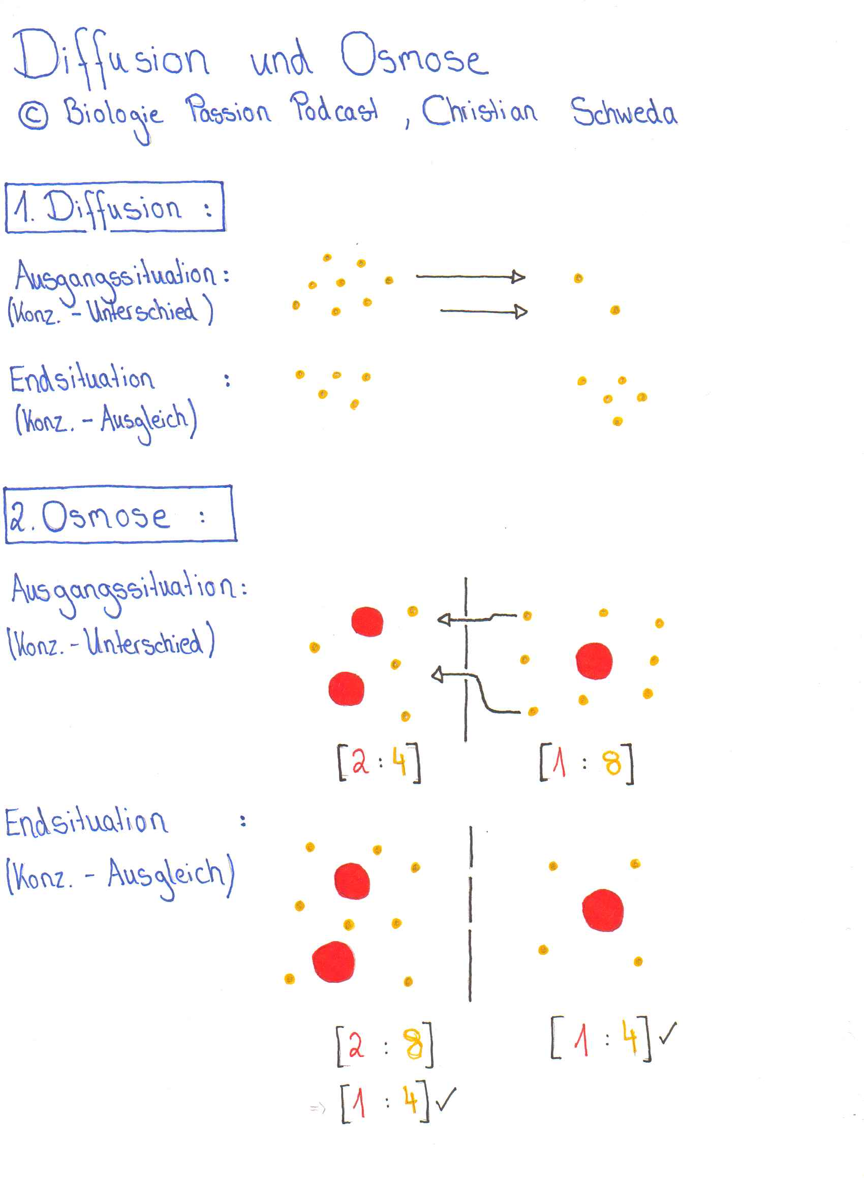 Diffusion und Osmose Arbeitsblatt - Biologie Passion Podcast