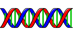 DNA Doppelhelix