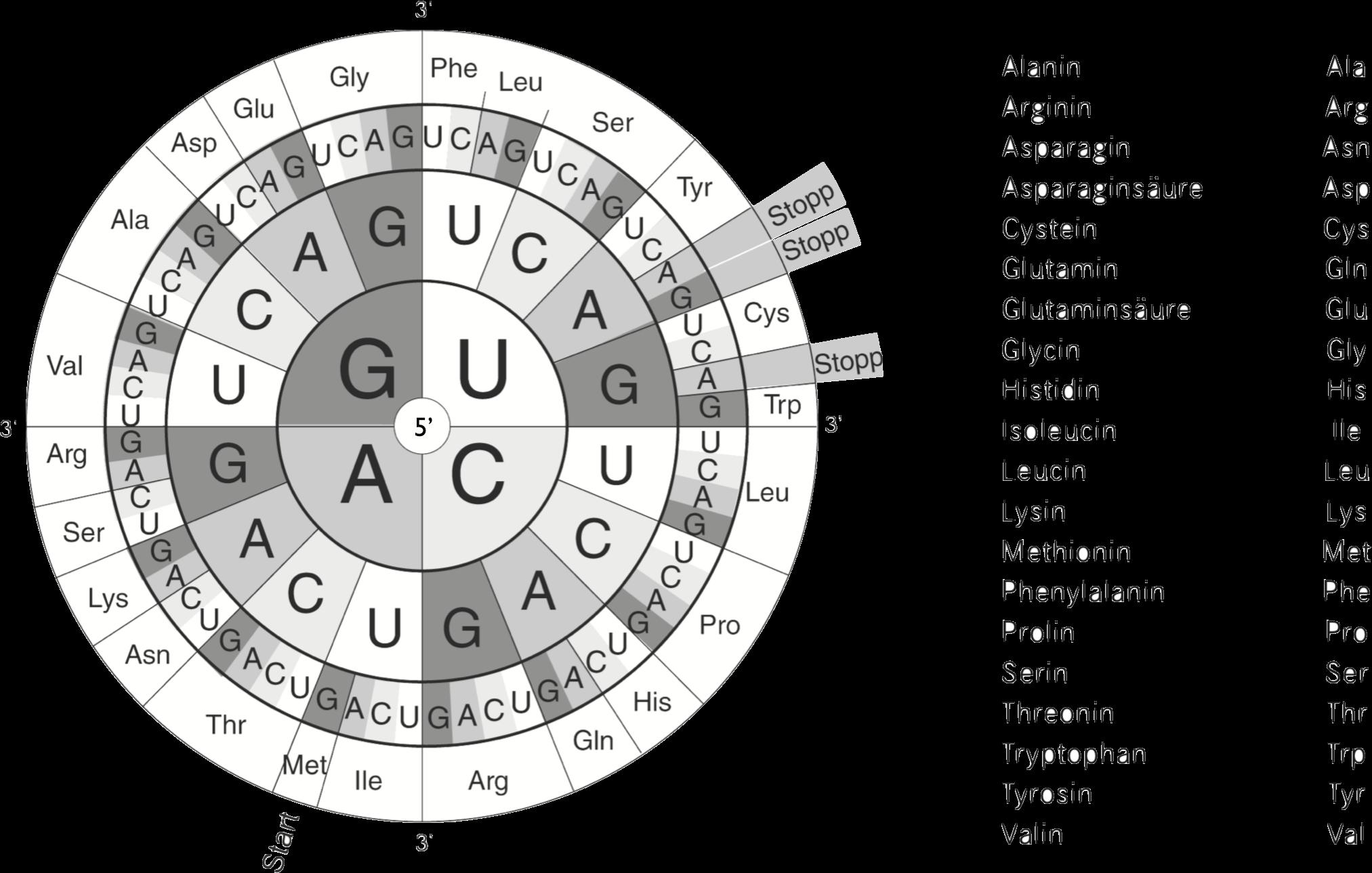 Code-Sonne - Der Genetische Code - Biologie Passion Podcast